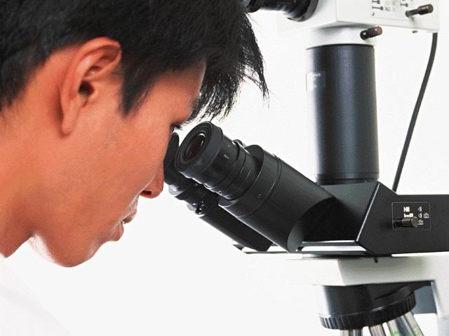 顕微鏡をのぞく